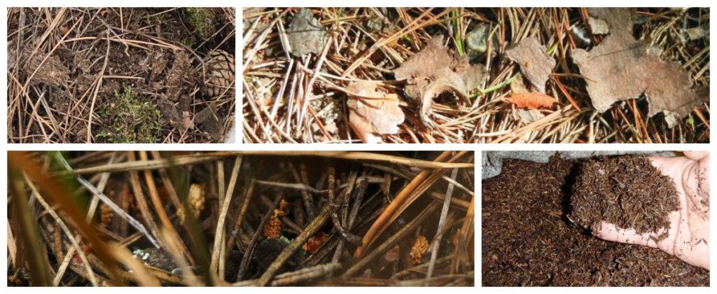 Хвойный (сосновый) опад для посадки голубики